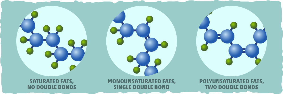 What are MUFAs? Deciphering Monounsaturated Fats from Polyunsaturated Fats with Biochemistry