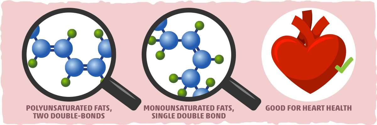 What is Polyunsaturated Fat? Through a Microscope