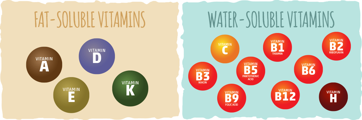 Vitamins — A Brief Overview