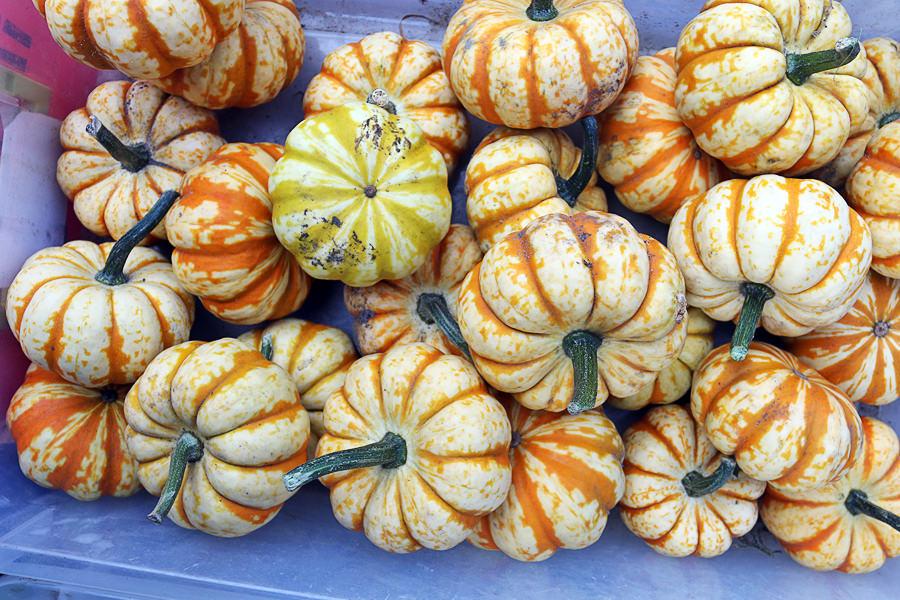PumpkinFarmersMarket