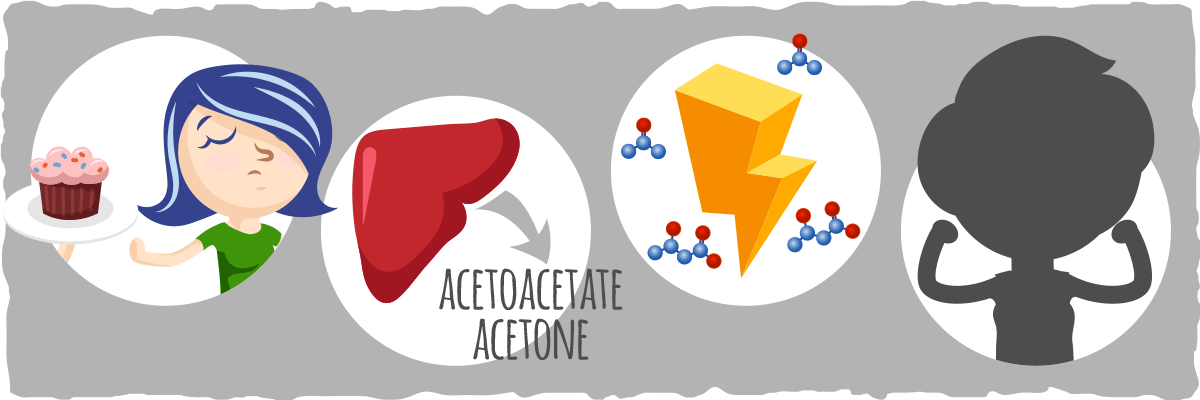 Putting it all Together — A Quick Overview of Ketosis