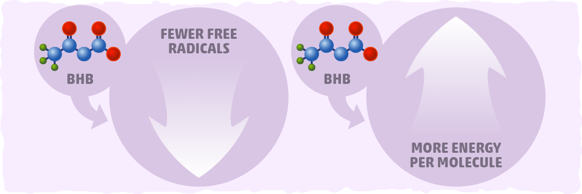 BHB from a Mechanistic Perspective