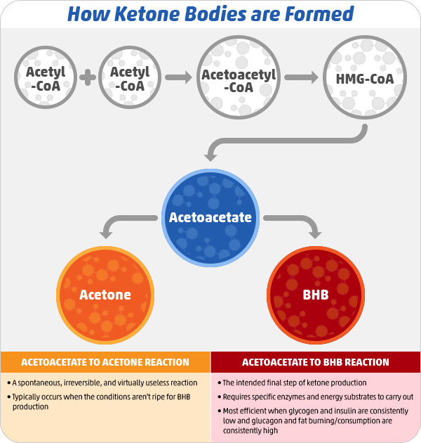How Ketone Bodies are Formed