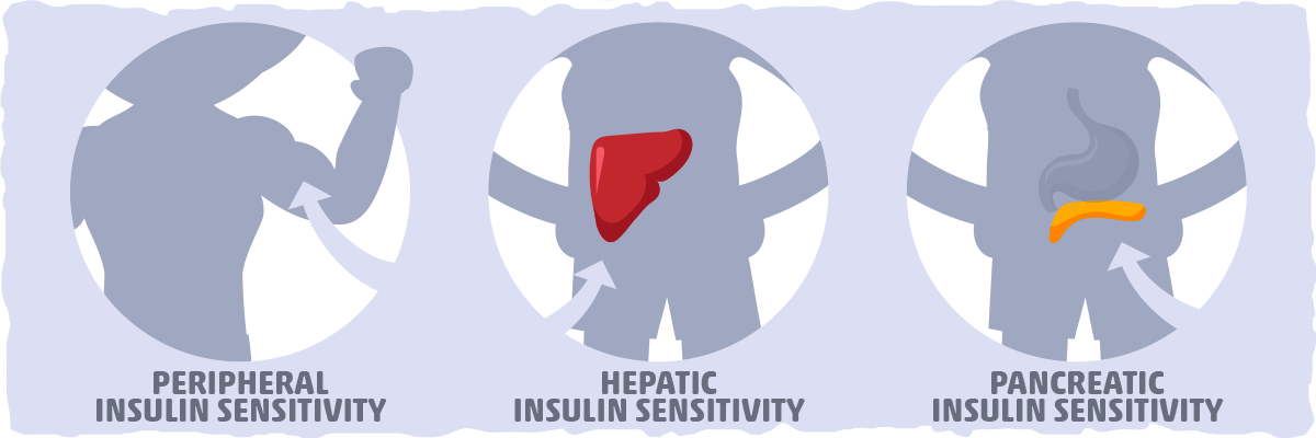 The Three Different Types of Insulin Sensitivity