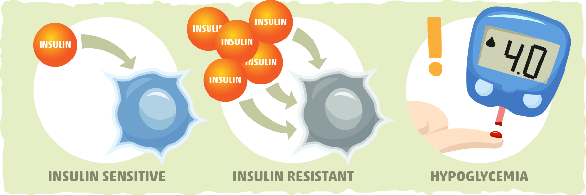 What is Insulin Sensitivity?