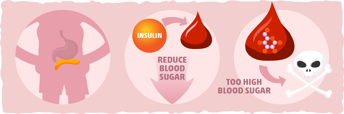 What is Insulin? The Lifesaving Effects of a Highly Misunderstood Hormone