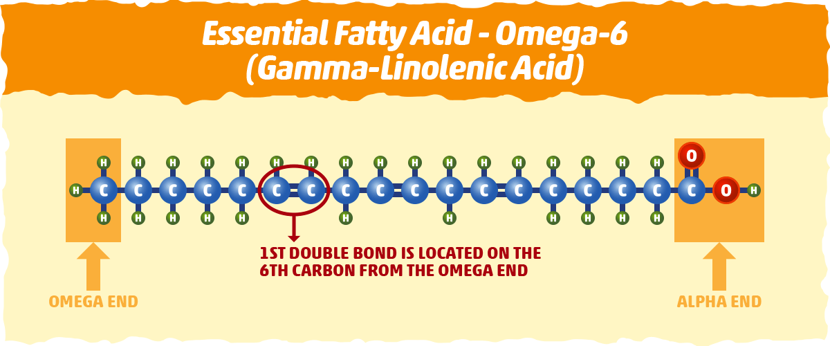 gamma-Linolenic acid, an omega-6 fatty acid