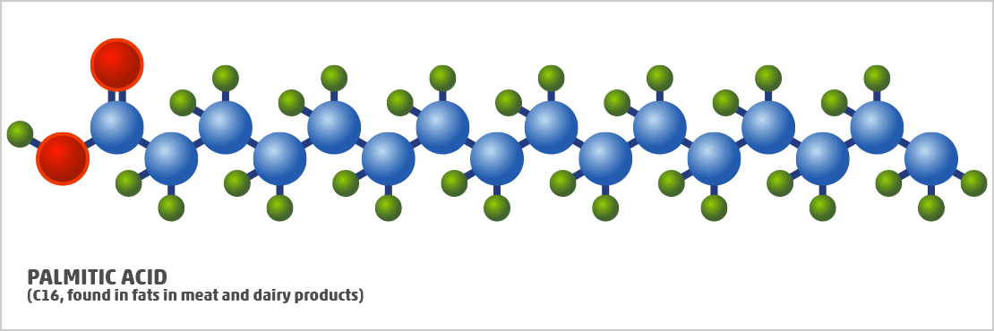 long-chain fatty acid called palmitic acid
