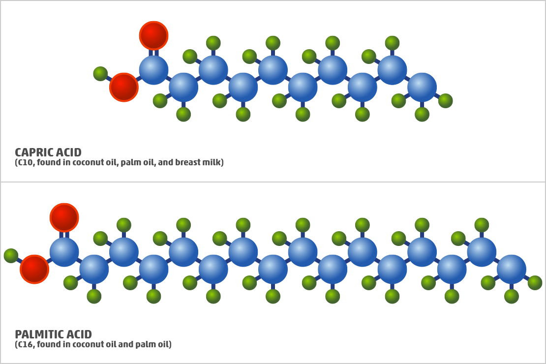 Different Saturated Fatty Acid Examples
